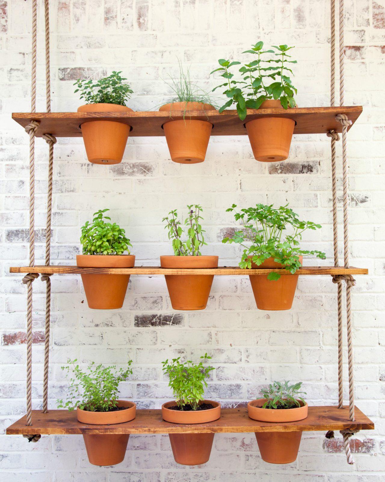grow herb garden